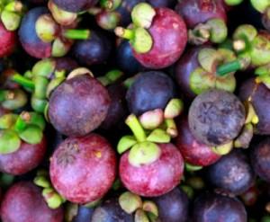 Le mangoustan superfruit du Mangoustanier antioxydant bio