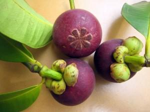 Fruit du mangoustanier biologique