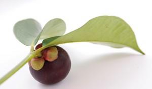 Le mangoustan biologique antioxydant puisssant